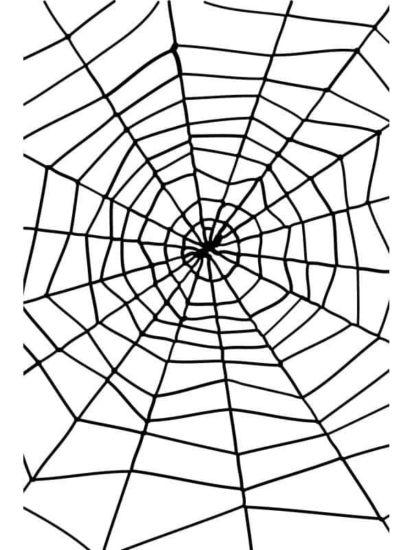 Spider & Spiders Web